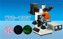 三目荧光显微镜WYS-13CY